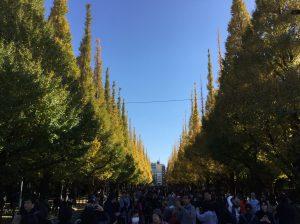 神宮外苑 銀杏並木が黄色に染まる